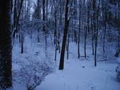 snow.2.9.13b.jpg