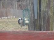 wooddpecker