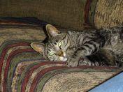 Taz (for Tazmanian Devil) at rest