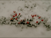 Spring in Pecos.JPG