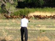 Video Taping Elk Crossing