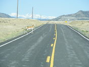 Where the deer and antelope roam!