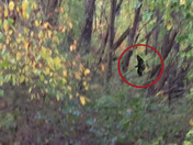Mysterious Creature Sightings