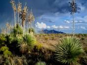 SW Desert