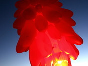 Nigth Glow--2010