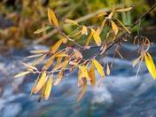 Jemez Autumn Images
