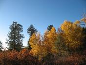 Taos Fall Colors
