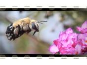BEE oh so careful