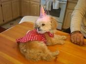 Chiquita's 4th birthday!!