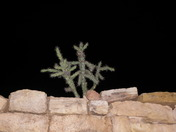 cactus growing out of a rock wall