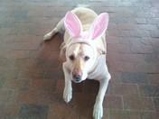 Bunny Rabbit Barta