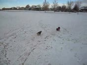 Snow Dogs Play