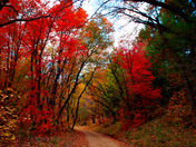 Mountain Fall Colors