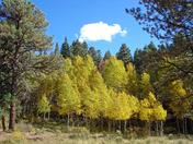 More aspens in Angel Fire show fall colors  OCT09.jpg