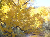 Yellow trees of October