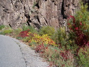 Fall colors in the Jemez