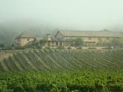 Fog among vineyards in Sonoma, California Oct 17, 2009