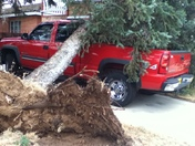 Tree on the Truck