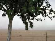 Dust storm on Belen west Mesa