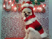 Merry Christmas from Zeta(Zee-ta)