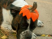 My dog Romo