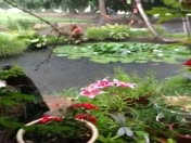 """Rain in Los Ranchos """"Finally"""""""