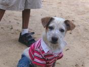 tiyanna's dog