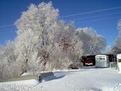 winter in springer by timm trujillo 001.JPG