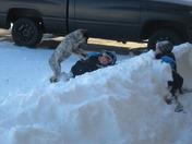 Dogs Love Snow too!