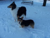 snow pics dogs and horses 040.jpg