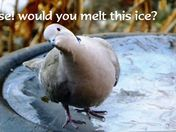 Please! Would you melt this ice?