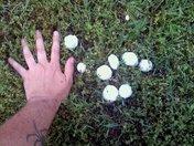 hail grass.jpg