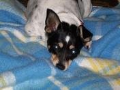 Penny Resting