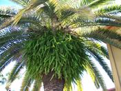Palm and Fern