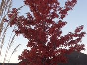 Fall Foliage in Mustang Ok