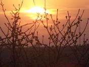 Close up shoot of sunset
