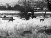 Some deer again.jpg