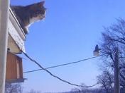 cat watching bird house feeder.jpg
