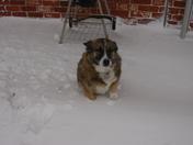 Dally Mae loves snow!