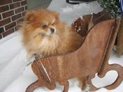 Razzle puppy in the snow.