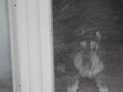 blizzard '09