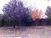 Our back yard - Fall 2012