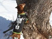 Oscar looking for squirrels