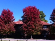 Fall Foliage in Blackwell