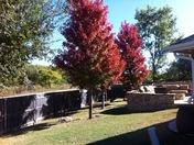 Foliage pic
