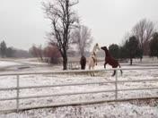 Piedmont Snow 2-25-13