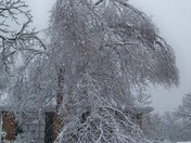 Tree Messed Up Ada