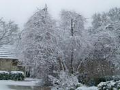 Ice Tree Ada