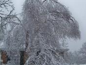 Iced Tree Ada