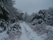 Snowy Road2 Ada